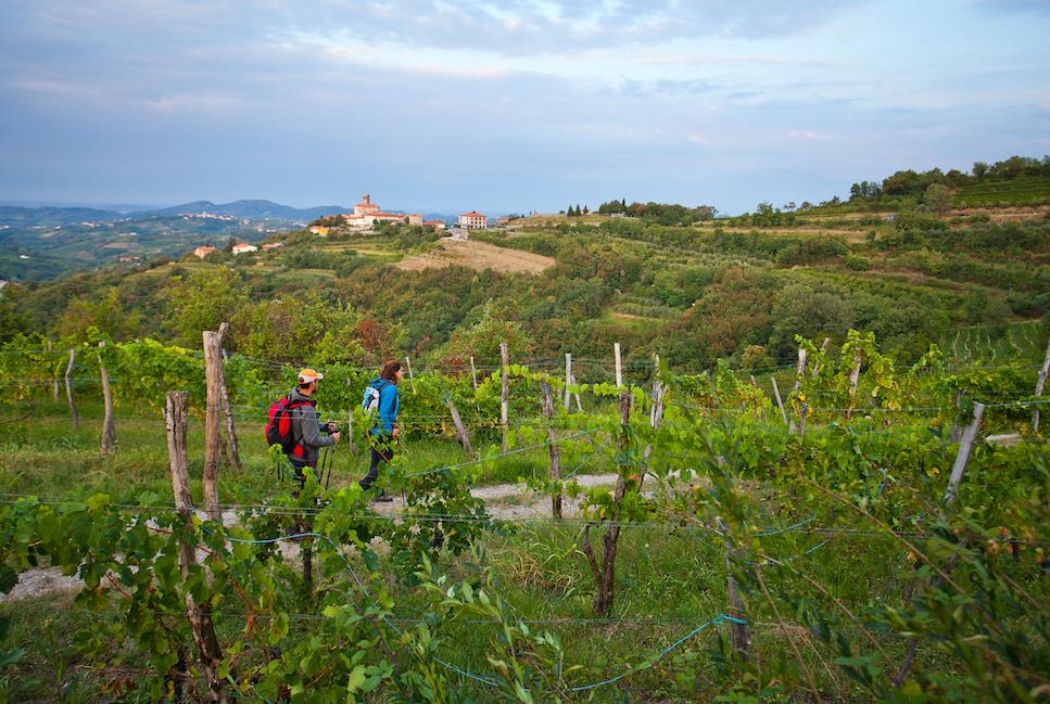 In vier neuen Etappen gelangt man vom Juliana Trail Weitwanderweg nun auch in die bekannte Weinregion Goriška Brda