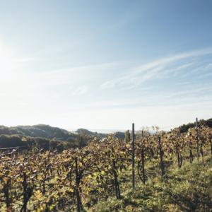 Traumhafte Genüsse im Thermen- und Vulkanland Steiermark
